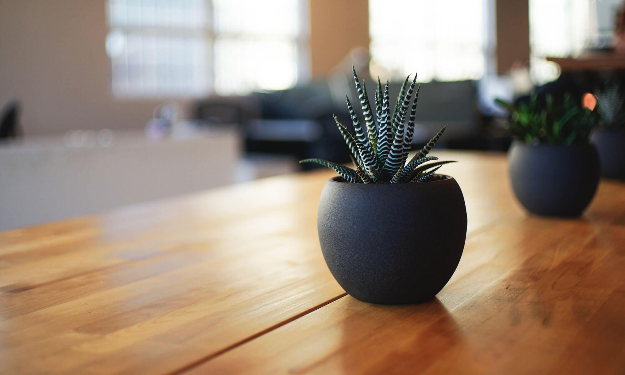 Plant Masters LLC