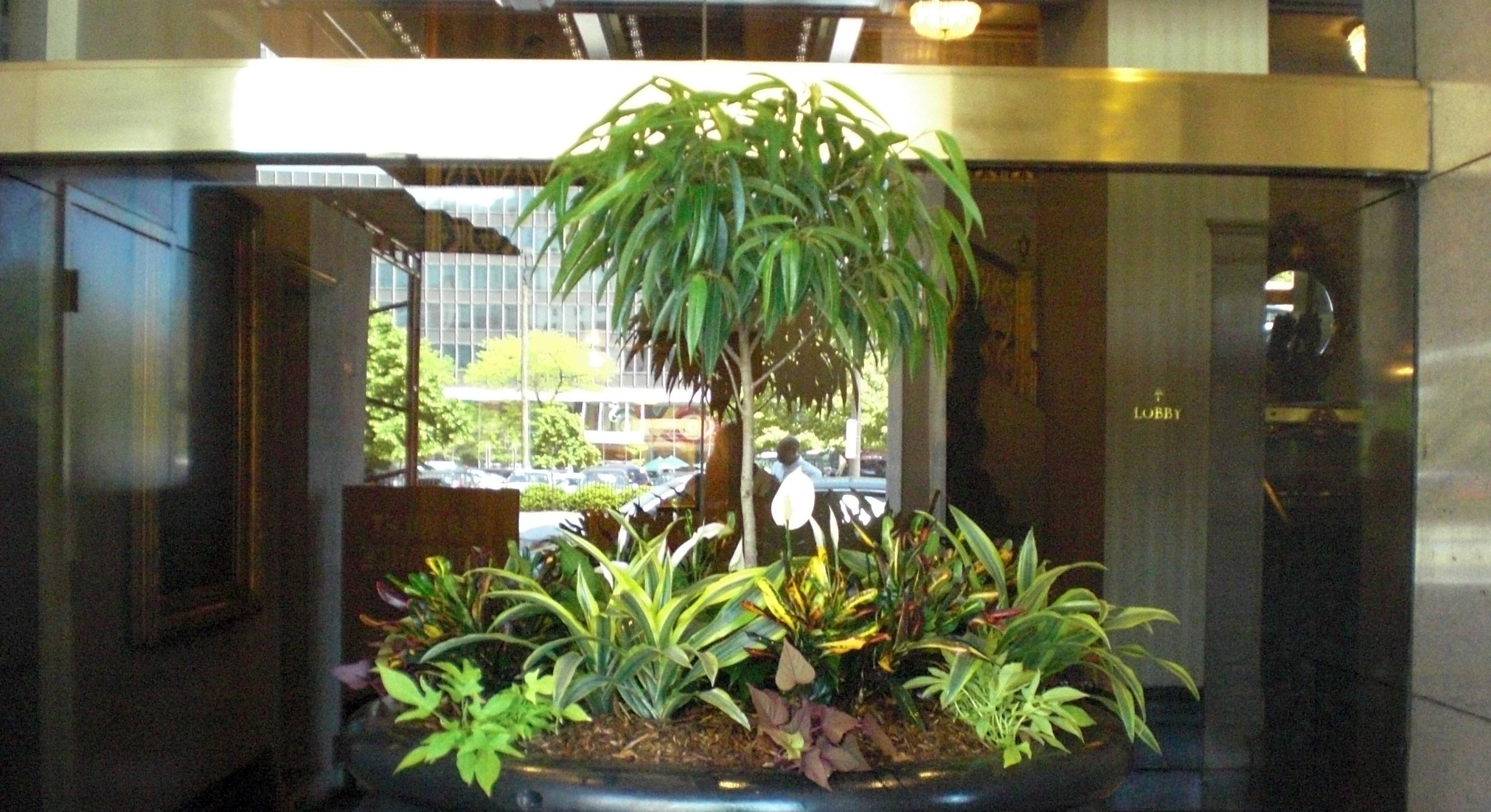 Interior Plant Care Maintenance | Commercial Floral Display Service