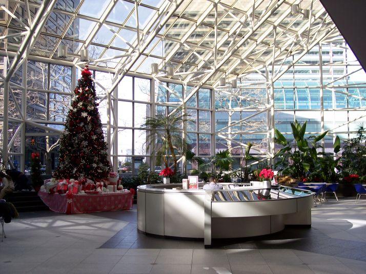 Interior Plant Care Maintenance Commercial Floral