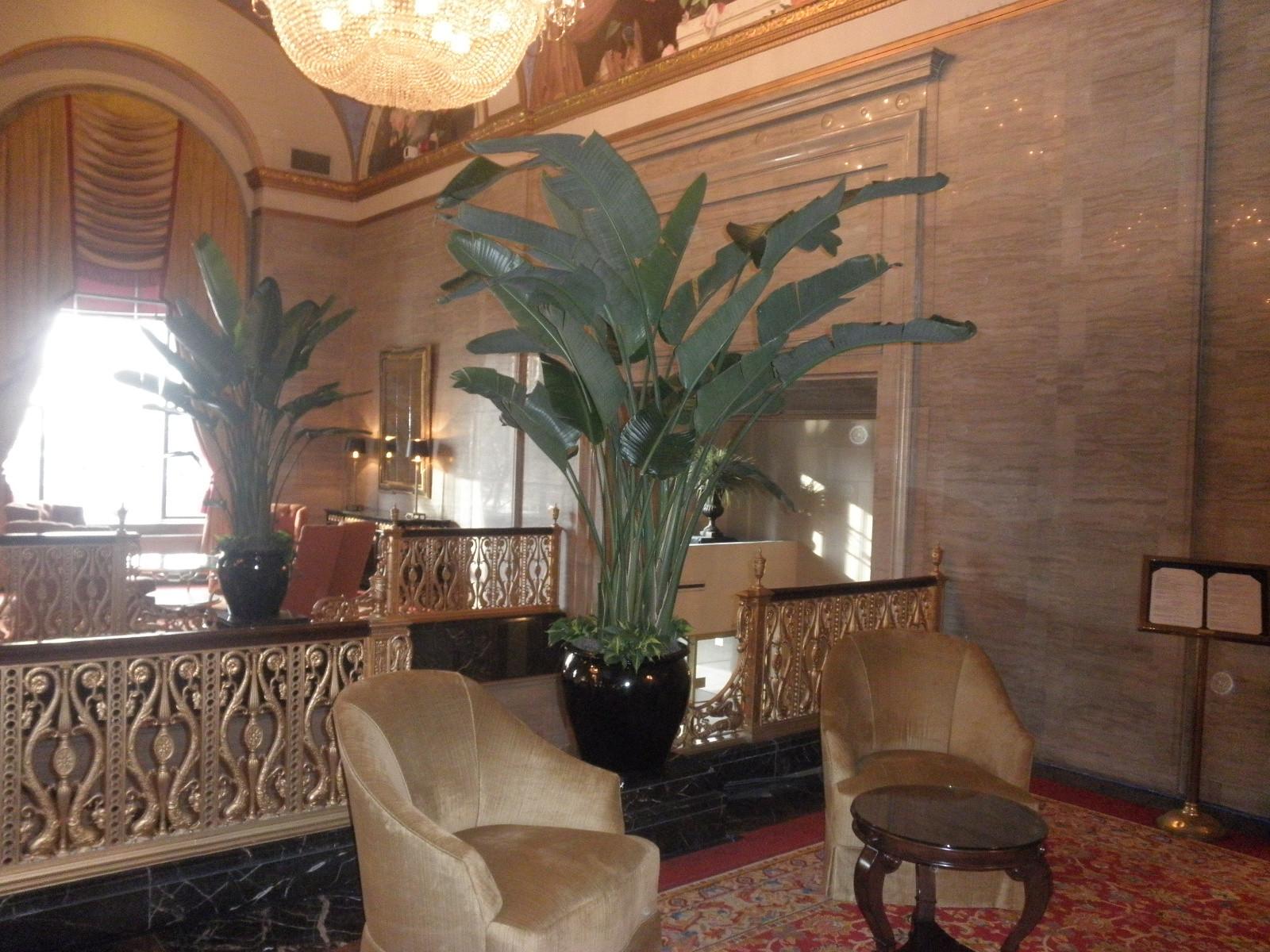 Large Palm 2