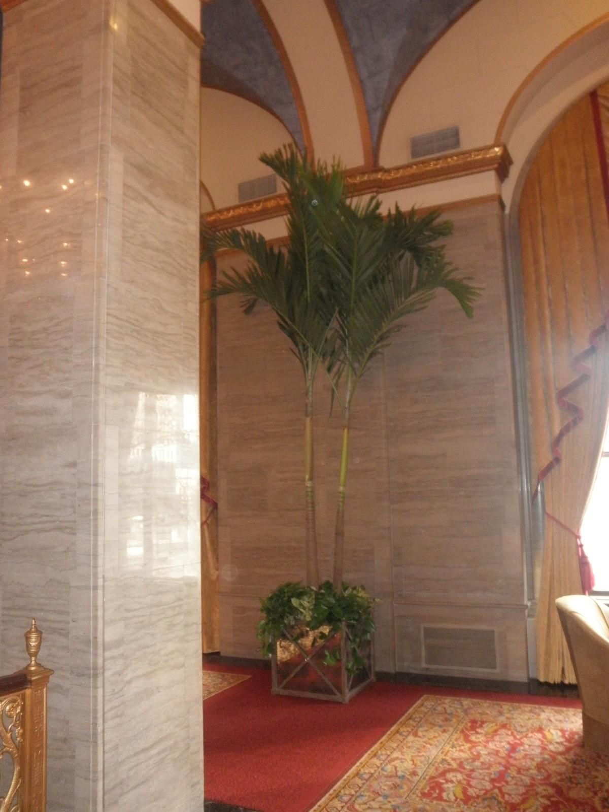 Large Palm 3