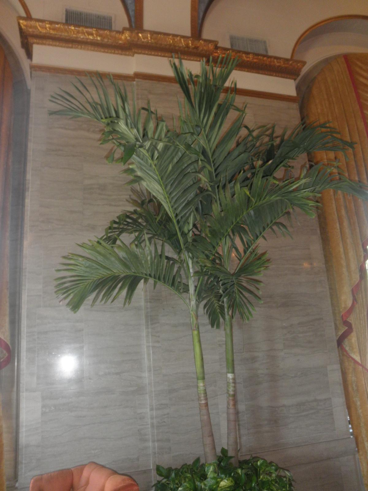 Large Palm 4