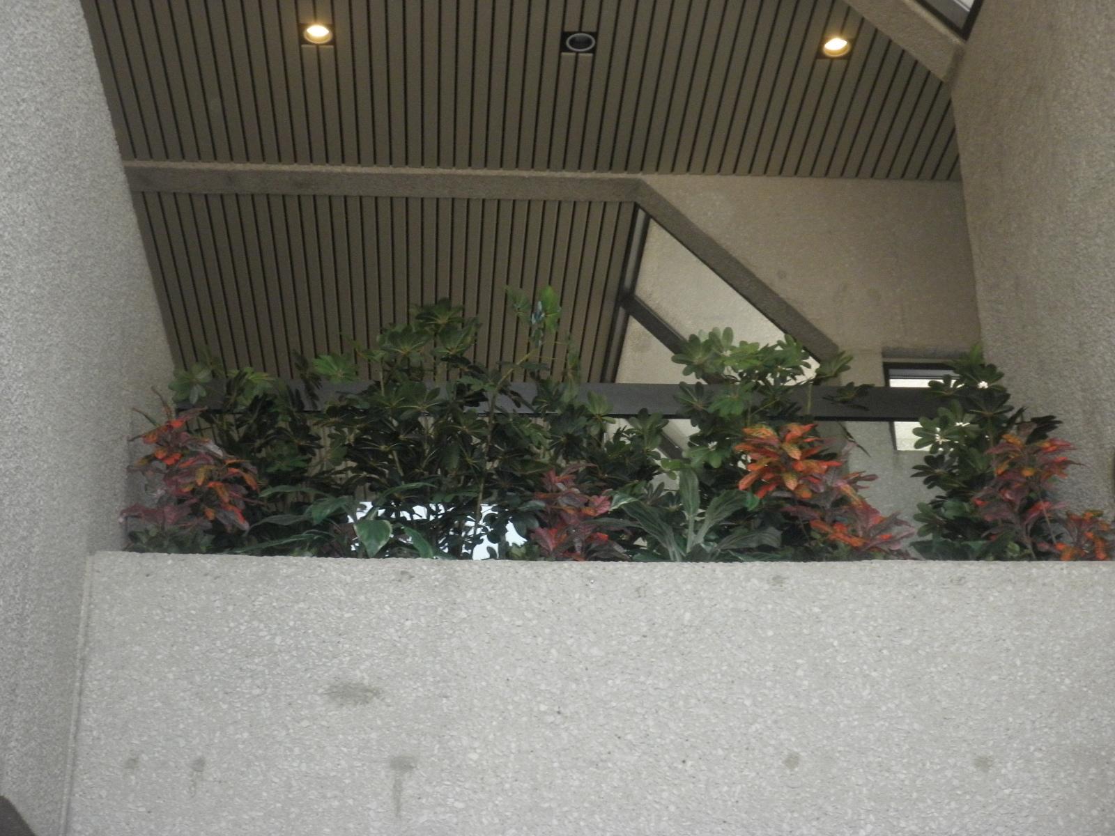 Silk Plants 2