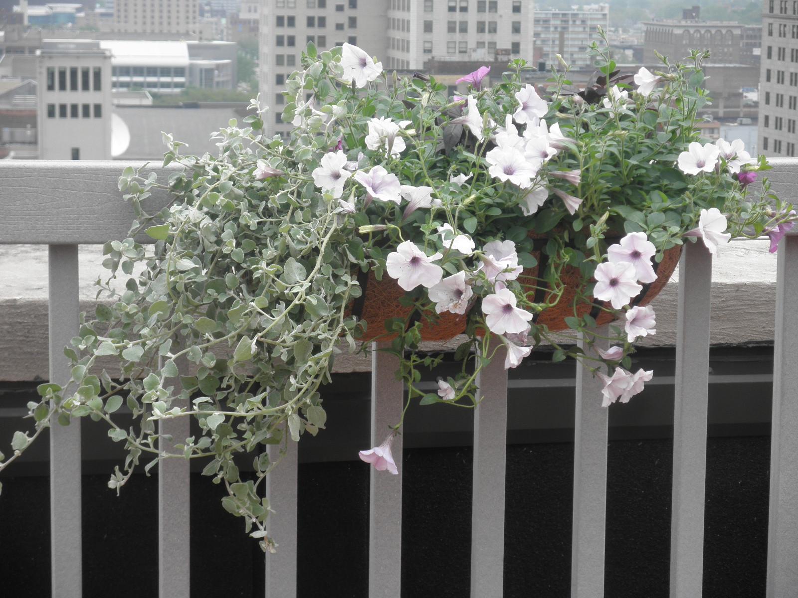 Exterior Small Planter