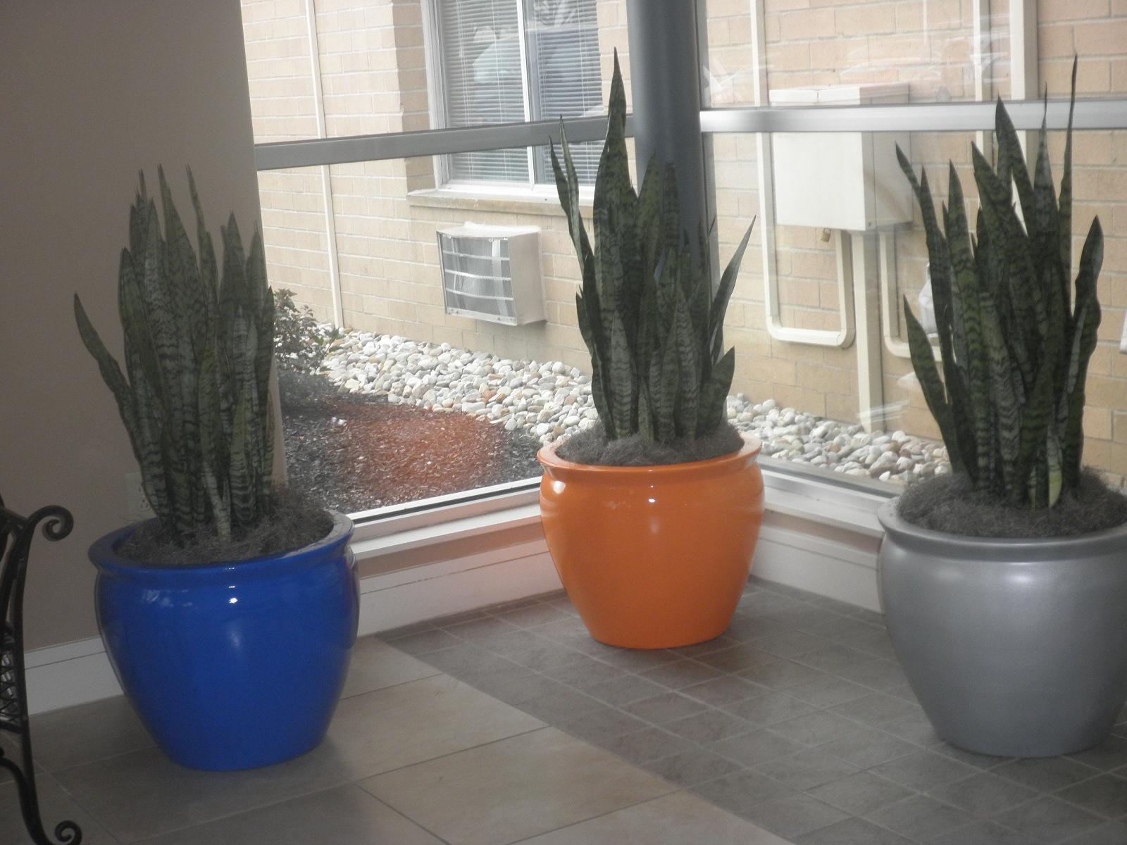 Summer Indoor Plants 4