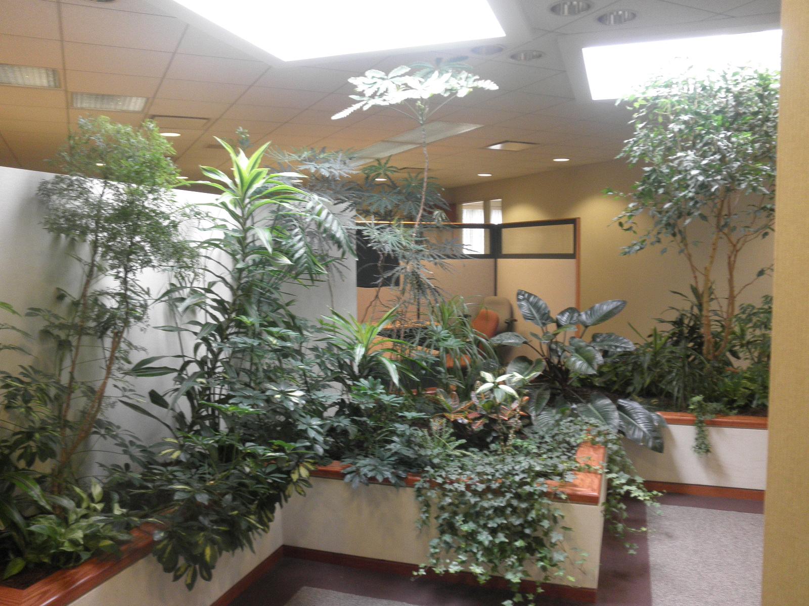 Summer Indoor Plants 3