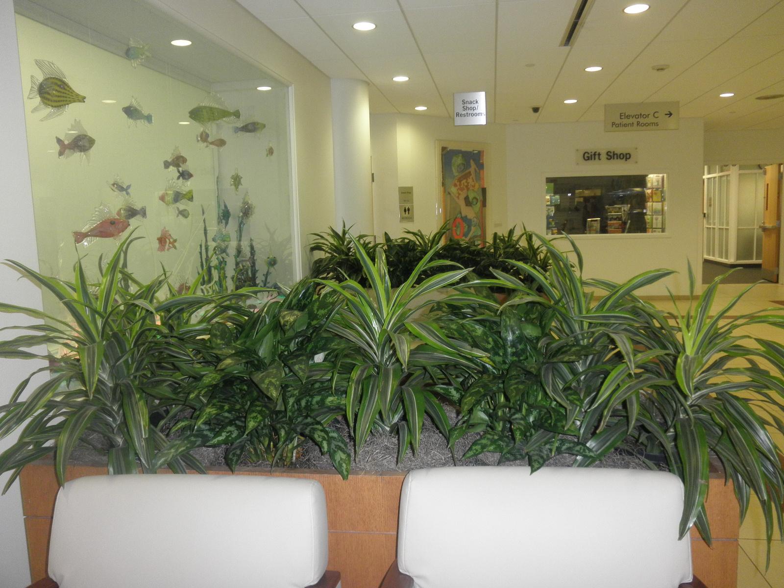 Summer Indoor Plants