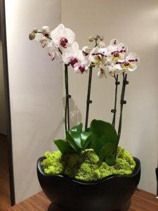 orchidbowl2